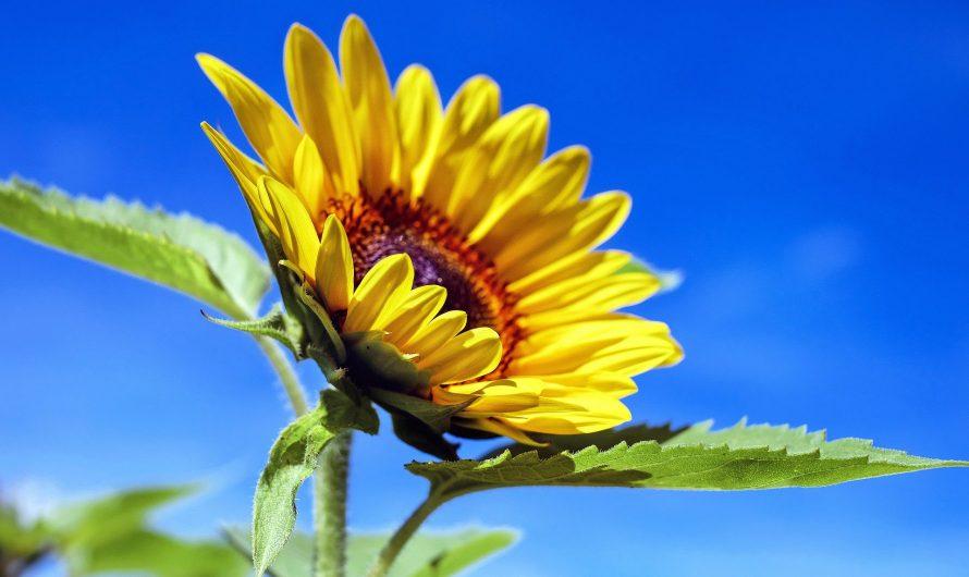 Le Soleil, votre nature primordiale