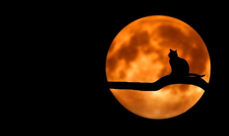 Lune natale et karma